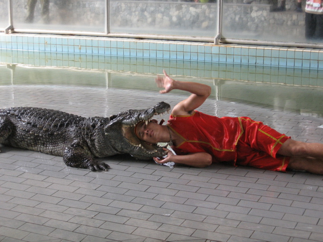 pattaya-crocodile-farm